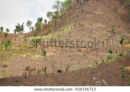 Forest cut down - stock photo