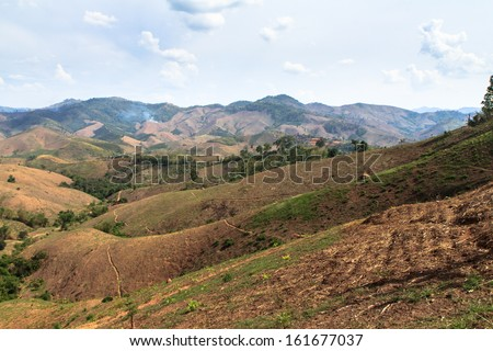 Forest cut down/Deforestation - stock photo
