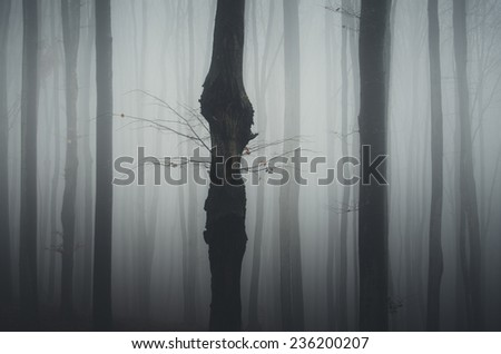 forest detail tree trunk - stock photo