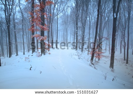Forest during winter with a foggy mood and a red tree - stock photo
