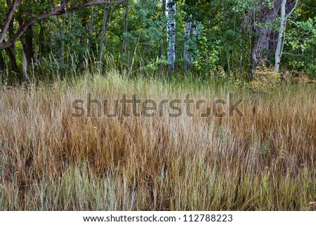 Forest Edge - stock photo