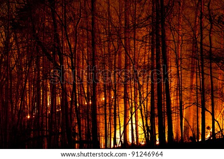 Forest Fire and Burning Trees - stock photo