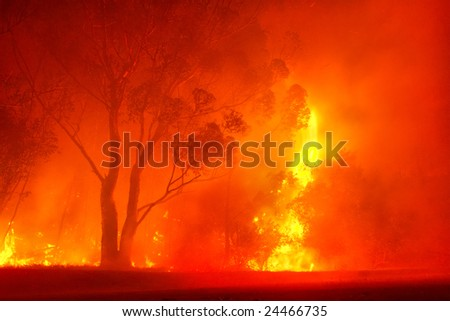 Forest fire in night. Shot near Stellenbosch, Western Cape, South Africa. - stock photo