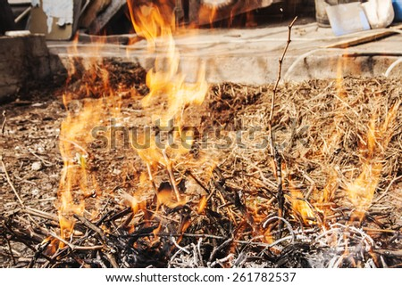 Forest fires. - stock photo
