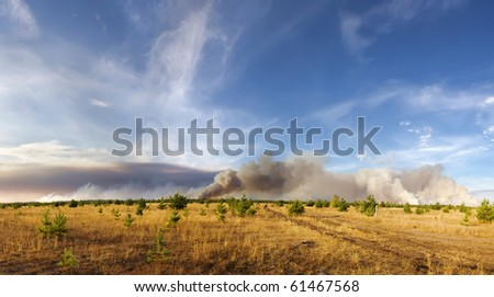 forest fires - stock photo