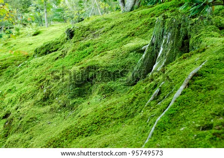 Forest floor covered with moss, natural green background - stock photo