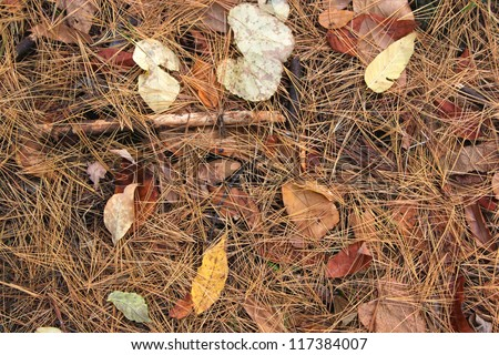 Forest floor in fall with colorful leaves and pine needles - stock photo