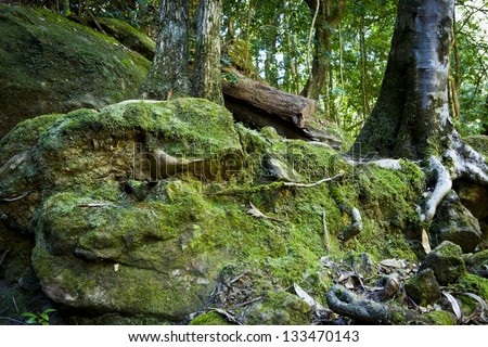 Forest floor vegetation, Tree roots and moss in the Blue Mountains in Australia. - stock photo