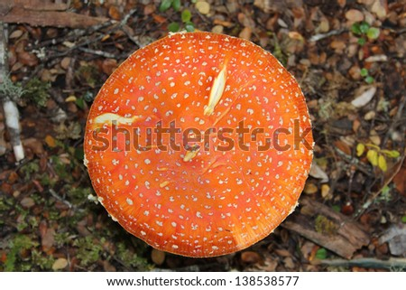 Forest fungus  - stock photo