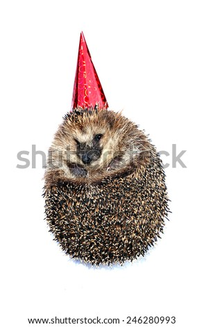 Forest hedgehog in a festive cap isolated on a white background - stock photo