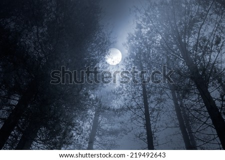 Forest in a foggy full moon night - stock photo
