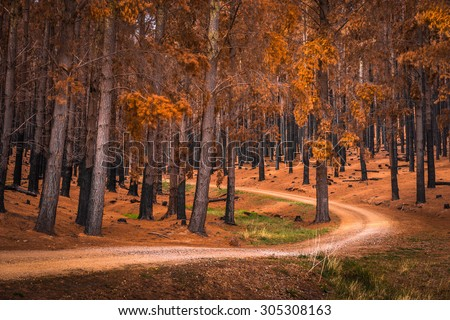 Forest in Adelaide Hills, South Australia - stock photo