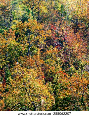 Forest in autumn with falling leaves and saturation color by back lighting from hard sunlight. - stock photo