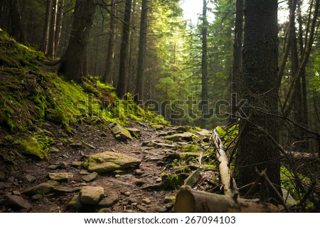 Forest in Carpathian mountains - stock photo