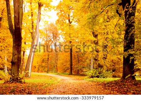 Forest in Fall - stock photo
