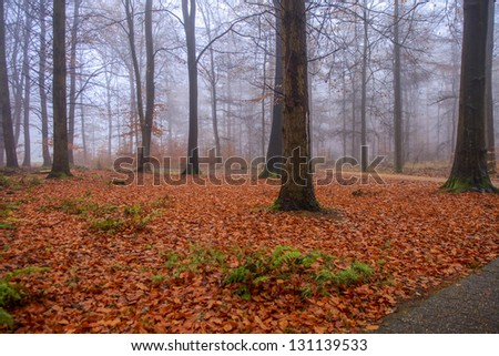 Forest in fog with colorful fallen leaves - stock photo