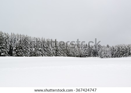 Forest in foggy forest covered by snow in wnter landscape in the black forest  - stock photo