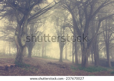 Forest in Mountain Range in Misty Weather - stock photo