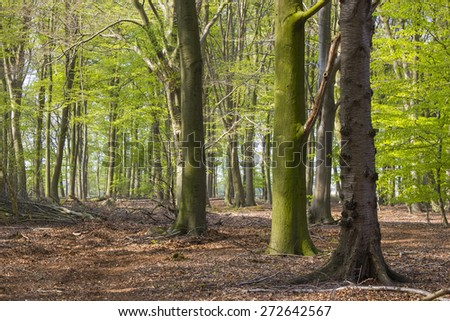 Forest in Spring, Germany - stock photo