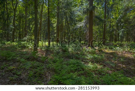 Forest in sunlight in spring - stock photo