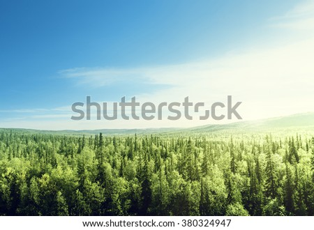 forest in sunset time - stock photo