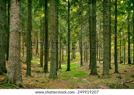 Forest in the Carpathian mountains - stock photo