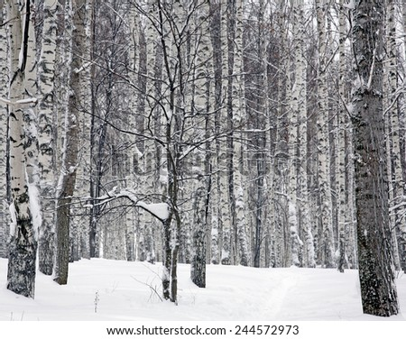 Forest in the snow - stock photo