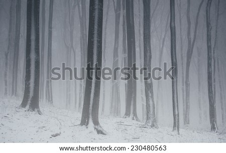 forest in winter with frozen trees and snow on ground - stock photo