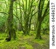forest, Killarney National Park, County Kerry, Ireland - stock photo