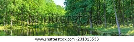 forest lake panorama - stock photo