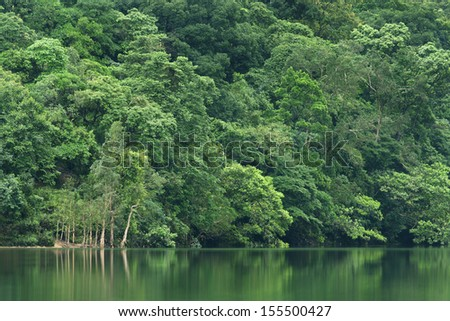 Forest lake reflecting trees - stock photo