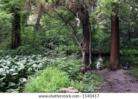 Forest lake vegetation - stock photo