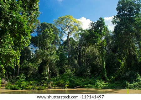 Forest landscape at Malaysia, Asia - stock photo