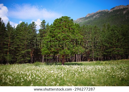 Forest landscape at the mountain slope - stock photo