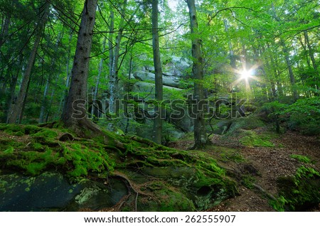 Forest landscape. Springtime. Sunlight in the branches of trees - stock photo