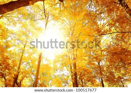 Forest Landscape Summer Leaves - stock photo