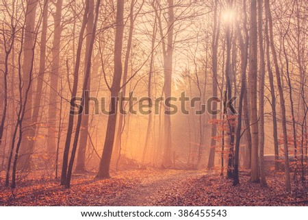 Forest landscape with mist and sunrise in the morning - stock photo