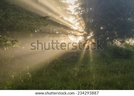 Forest misty landscape with sun rays through the trees - stock photo