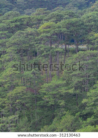 Forest of green pine trees on mountainside with rain in Dalat, Vietnam. - stock photo