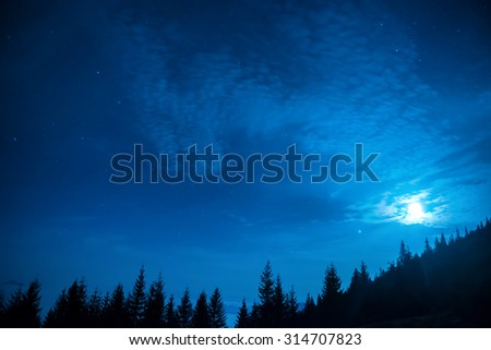 Forest of pine trees under moon and blue dark night sky with many stars. Winter christmas background - stock photo