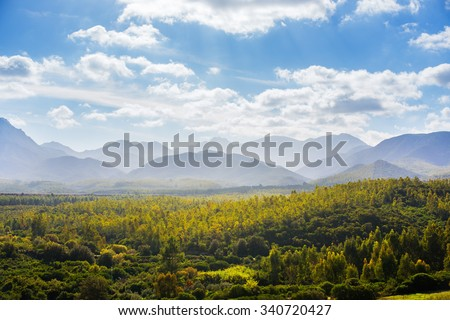 Forest of trees illuminated by the sun in backlit - stock photo