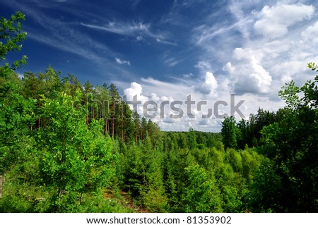 forest on the hills in Latvia. Wide view. - stock photo