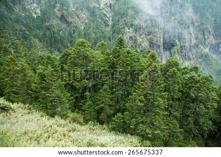 forest on the mountain - stock photo
