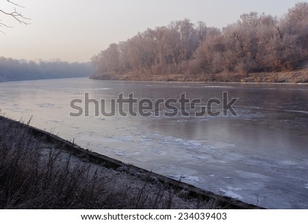Forest on the riverbank - stock photo
