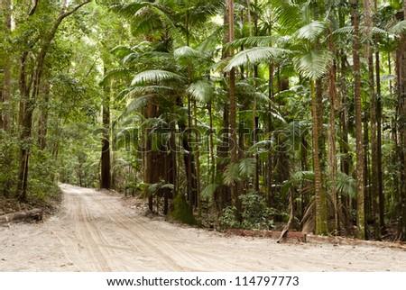Forest on the sand, Fraser Island, Australia - stock photo