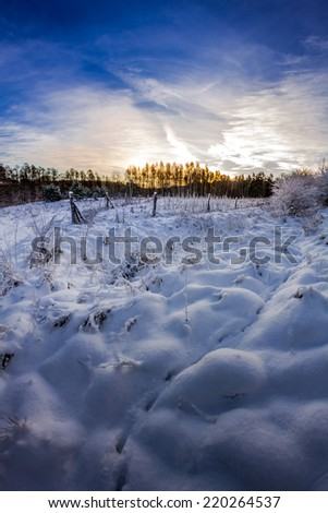 Forest path covered with snow at sunrise - stock photo