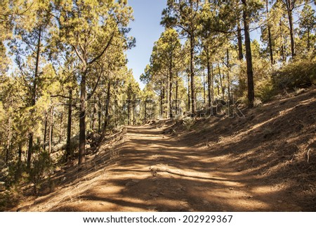 Forest path Gran Canaria, Canary Islands, Spain - stock photo