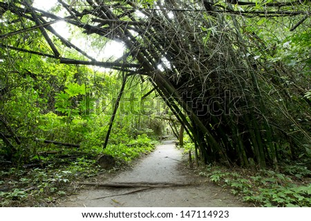 Forest path in Thailand - stock photo