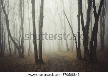 forest path with fog - stock photo
