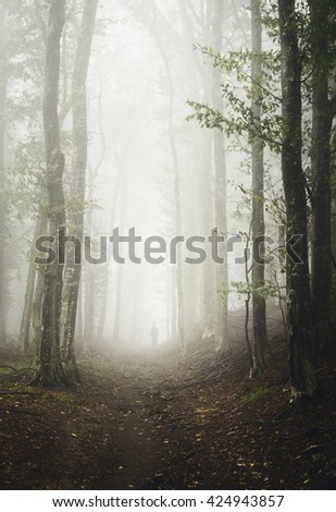 forest path with man wandering - stock photo